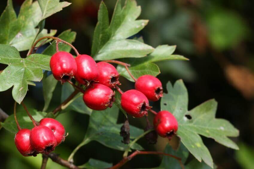 Berries autumn walk