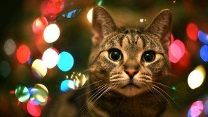 christmas-fayre-cats-protection-centre-iow