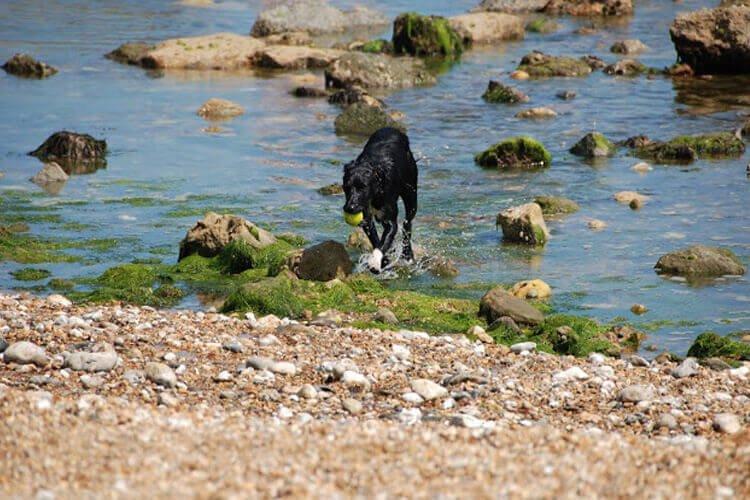 Dog Friendly Beaches Isle of Wight