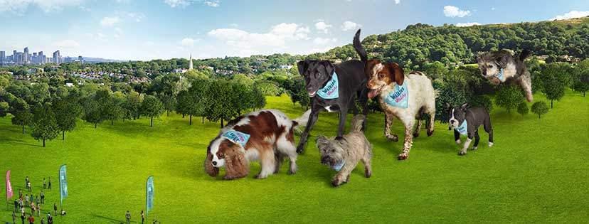 dog-walking-event-iow