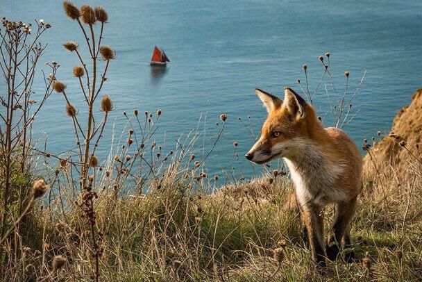 fox-boat-at-alum-bay