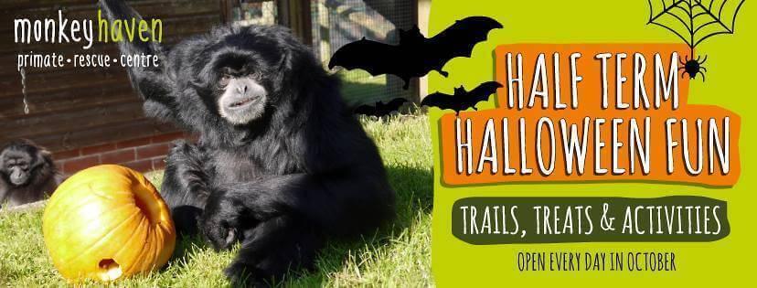 halloween-fun-at-the-monkey-haven-iow