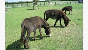 Isle of Wight Donkey Sanctuary HEADER