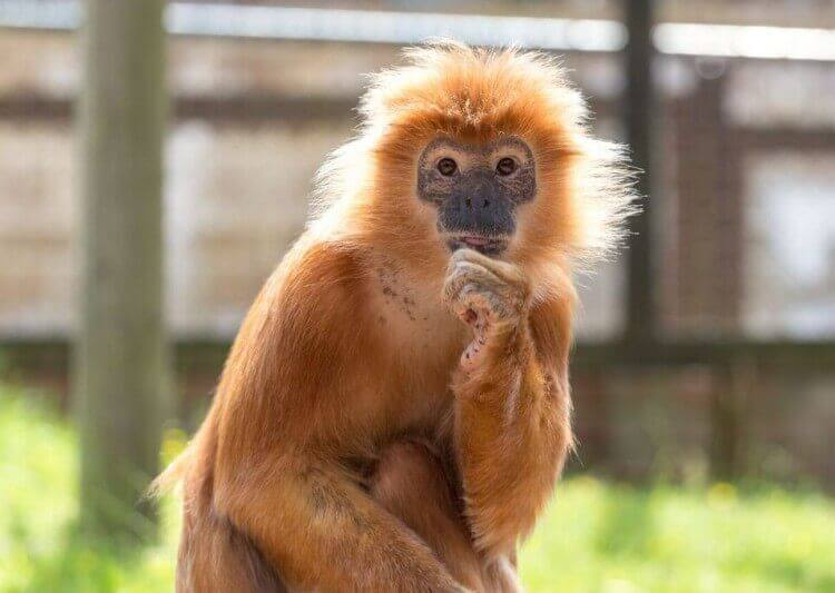 Monkey Haven Isle of Wight sanctuary visitor attraction newport