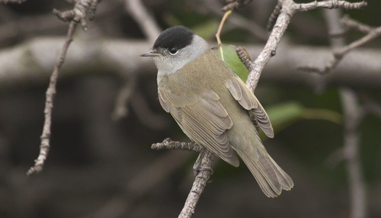 birdwatchingevent