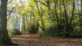 borthwood-copse-autumn-Isle of Wight