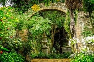 botanic gardens ventnor isle of wight 4
