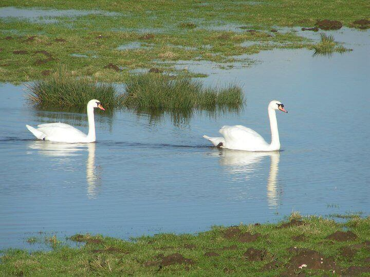 brading and bembridge marsh isle of wight