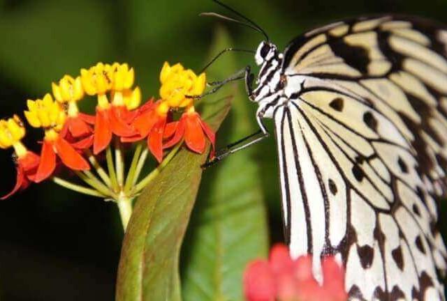 Butterfly & Fountain World,  Newport,  Isle of Wight