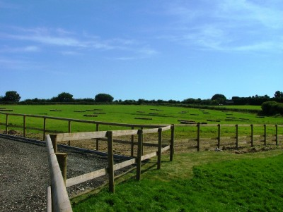 Seabiscuit, The Island Riding Centre, Newport, Isle of Wight