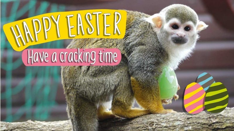 Have a Cracking Time at Monkey Haven This Easter
