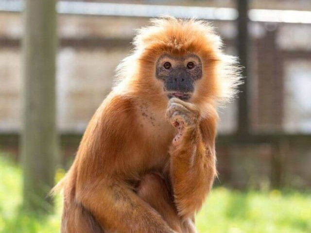 Monkey Haven, Isle of Wight