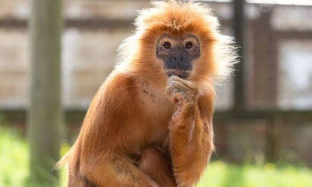 Monkey Haven, Isle of Wight – Registered Charity