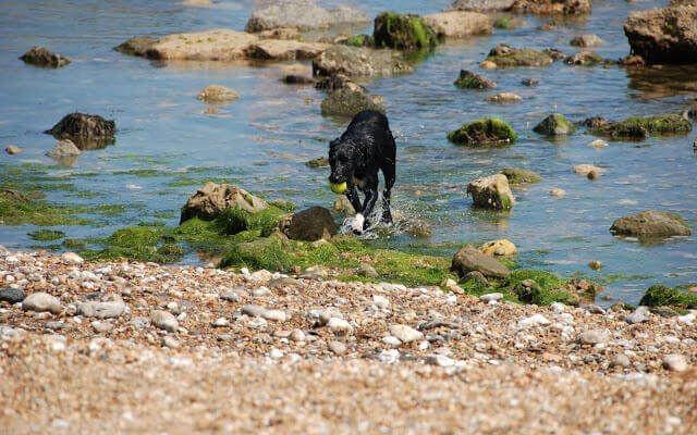 Monks Bay, Bonchurch, Isle of Wight