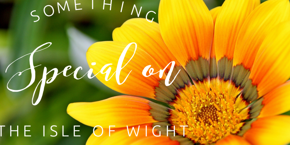 Somethin' SPECIAL on the Isle of Wight – Newsletter