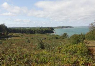 bouldner-forest-yarmouth-iow
