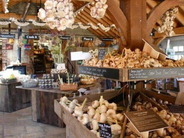 The Garlic Farm, Newchurch, Isle of Wight