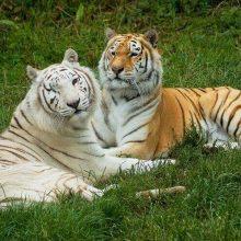 Isle of Wight Zoo, Sandown