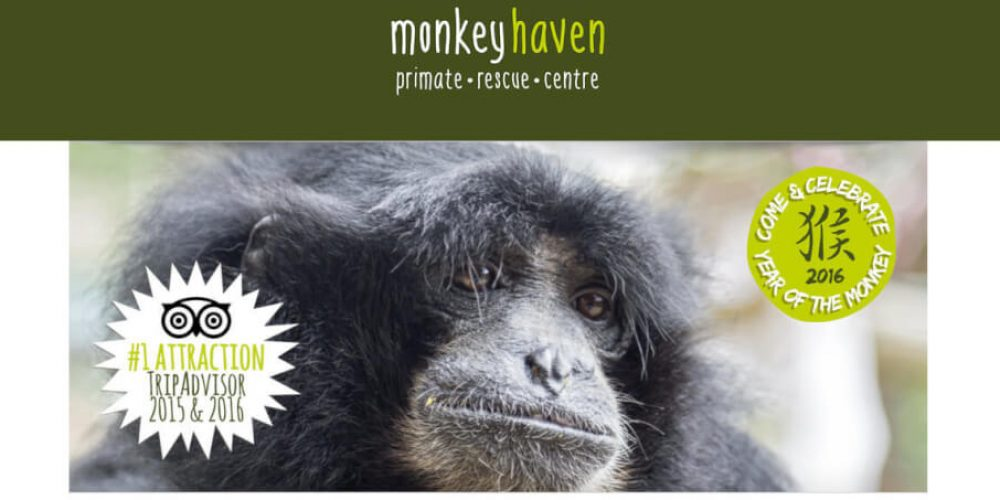 Well Done – Another Award for the Isle of Wight Monkey Haven