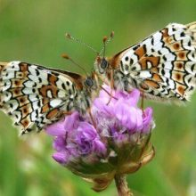 Compton Downs Walk with Butterflies and Views – 5 Miles