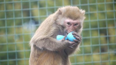easter monkey haven Isle of wight