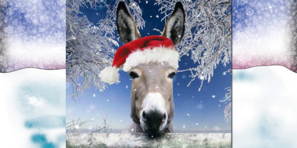 FORTHCOMING OCT/NOV & DEC – FUN EVENTS at the ISLE OF WIGHT DONKEY SANCTUARY