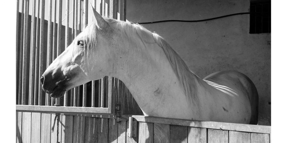 TAKE YOUR HORSE ON HOLIDAY TO THE ISLE OF WIGHT – TOP NOTCH ACCOMMODATION & FACILITIES FOR YOU BOTH!