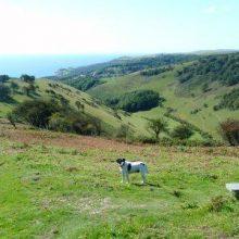 Ventnor Downs: pre-history to Cold War walk – 2.6 miles