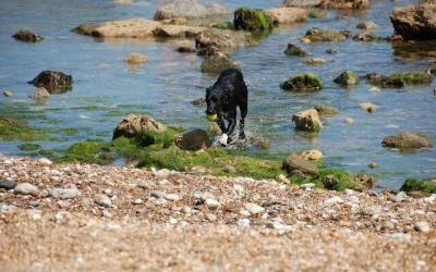 Monks Bay Bonchurch Isle of Wight