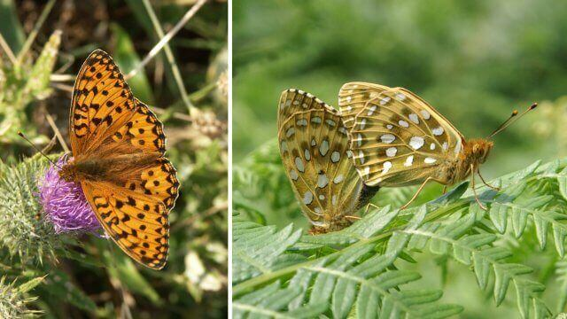 compton downs butterflies and views walk