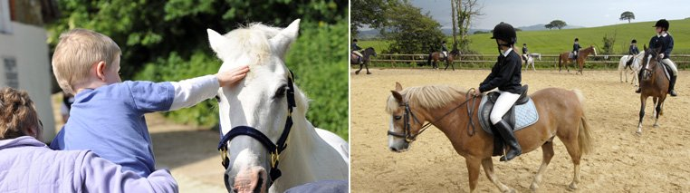 Allendale isle of wight riding stables