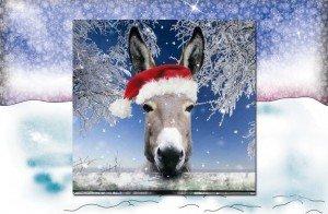 iow-donkey-xmas