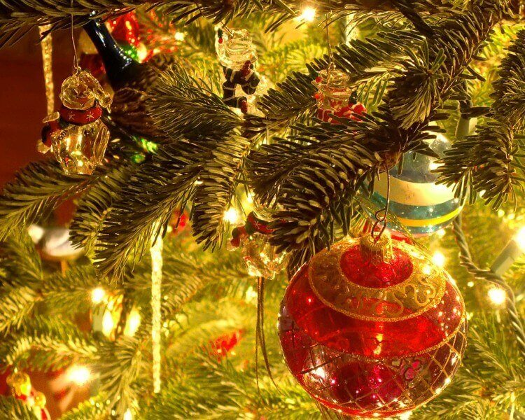 isleof wight christmas tree festival