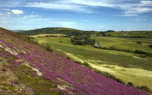 Brighstone Down Isle of Wight