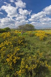 Isle of Wight Downland