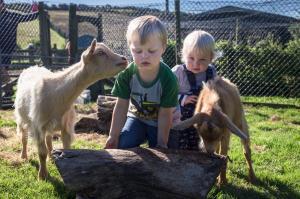 Kids of all kinds like Nettlecombe Farm