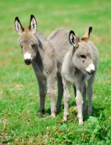 Donkeys at Nettlecombe Farm