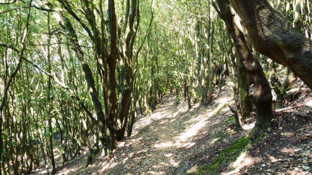 views of ventnor walk isle of wight